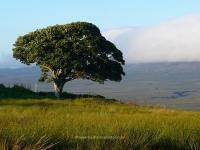 favourite-tree-august.jpg