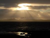 geese-dark-sky-loch-indaal.jpg