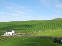 kilchiaran-farm-fields.jpg