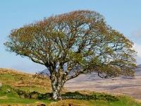 my-favorite-tree-on-islay.jpg