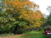 autumn-colours-near-jura-house.jpg